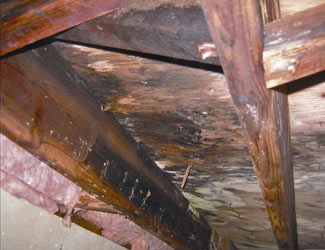 mold and rot in a Saint Paul crawl space