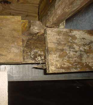 Extensive basement rot found in Rochester by Complete Basement Systems of MN